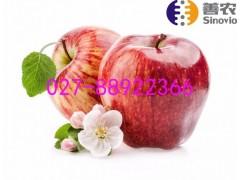 红富士生鲜水果配送品质水果,源自大自然的馈赠